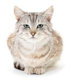 Kattunge på en vitbakgrund Fotografering för Bildbyråer