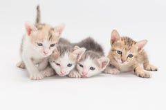 Kattunge på en vitbakgrund Royaltyfri Bild