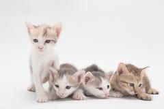 Kattunge på en vitbakgrund Arkivfoto