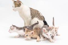 Kattunge på en vitbakgrund Arkivbilder