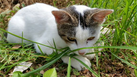 Kattunge på fältet Royaltyfria Bilder