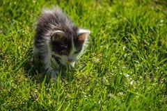 Kattunge på gräset Arkivbilder