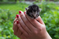 Kattunge på händer Royaltyfria Foton