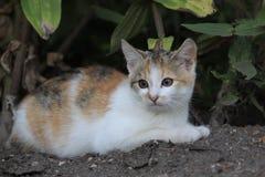 Kattunge på jord Arkivfoton