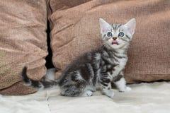 Kattunge på soffan Royaltyfri Foto