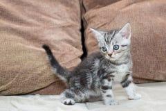 Kattunge på soffan - materielbild Arkivfoton