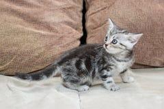 Kattunge på soffan - materielbild Royaltyfri Bild