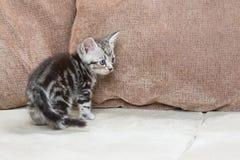 Kattunge på soffan - materielbild Arkivbild