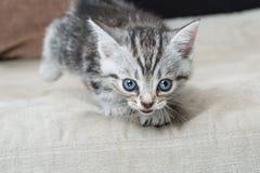 Kattunge på soffan - materielbild Fotografering för Bildbyråer
