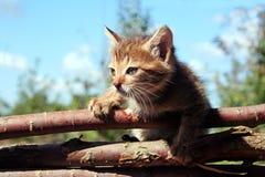 Kattunge på staketet Royaltyfria Foton