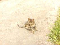 Kattunge på torr jordning på en solig dag Fotografering för Bildbyråer