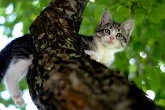 Kattunge på treen Arkivbilder