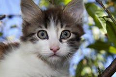 Kattunge på treen Fotografering för Bildbyråer