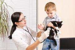 Kattunge på veterinären royaltyfria foton