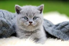 Kattunge på den vita filten Arkivbilder