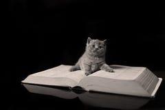 Kattunge på en bok Royaltyfria Bilder