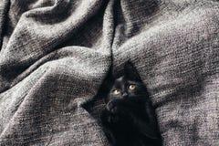 Kattunge på filten Fotografering för Bildbyråer