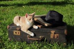 Kattunge som är röd på en gammal resväska med böcker och en hatt Royaltyfri Foto