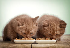 Kattunge som äter kattmat royaltyfria bilder