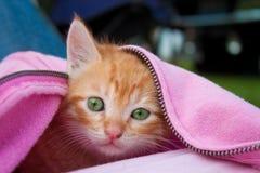 kattunge som blir varm Arkivfoto