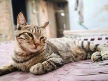 Kattunge som försöker att sova på säng royaltyfri foto