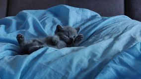Kattunge som ligger i en blå säng lager videofilmer