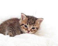 kattunge som ligger på en filt Arkivfoton