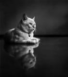 Kattunge som ligger på rent golv Fotografering för Bildbyråer