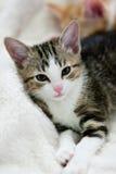 Kattunge som ligger på säng som ser rak Arkivfoton