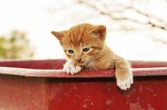 Kattunge som ser över vagnen Royaltyfria Bilder