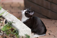 kattunge som ser upp Royaltyfri Fotografi