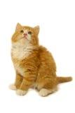 kattunge som ser upp Arkivfoto