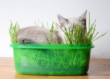 Kattunge som sover i gräs Arkivbild