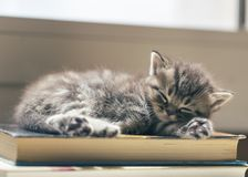 Kattunge som sover på en bok royaltyfria foton