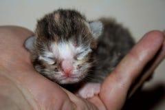 Kattunge som sover på en hand Arkivbild
