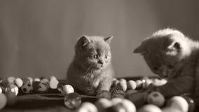 Kattunge som spelar med bollar lager videofilmer