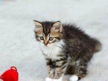 Kattunge som spelar med en boll av rad Arkivbild