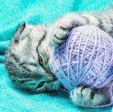 Kattunge som spelar med en boll av tråden Royaltyfria Bilder