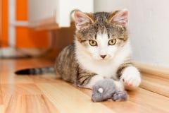 Kattunge som spelar med en leksak Fotografering för Bildbyråer