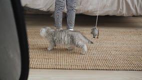 Kattunge som spelar med en pilbåge arkivfilmer