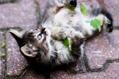 Kattunge som spelar med en växt, kattunge med sidor, kattunge som spelar i gatan Arkivbilder