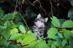 Kattunge som spelar med en växt, kattunge med sidor, kattunge som spelar i gatan Arkivbild