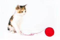 Kattunge som spelar med ett garnnystan Royaltyfria Foton