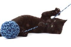 Kattunge som spelar med garn Royaltyfri Foto