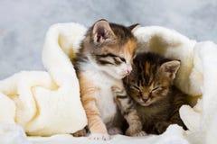 Kattunge som stängs i handduk Royaltyfri Fotografi