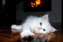 Kattunge som sträcker på golvet Arkivfoto