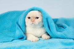Kattunge som ut från under kikar den blåa filten Arkivbild
