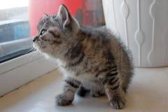 Kattunge som ut ser fönstret Arkivbilder