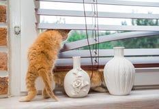 Kattunge som ut ser fönstret Royaltyfri Fotografi