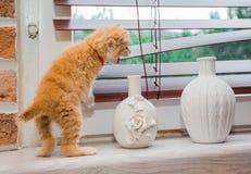 Kattunge som ut ser fönstret Royaltyfria Bilder